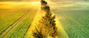 fields-in-morning-fog